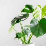 7 hardy plants for the serial plant killer