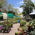 STEPS-Nursery-gardening-benefits